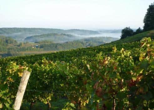 Domaine Tissot vins du jura