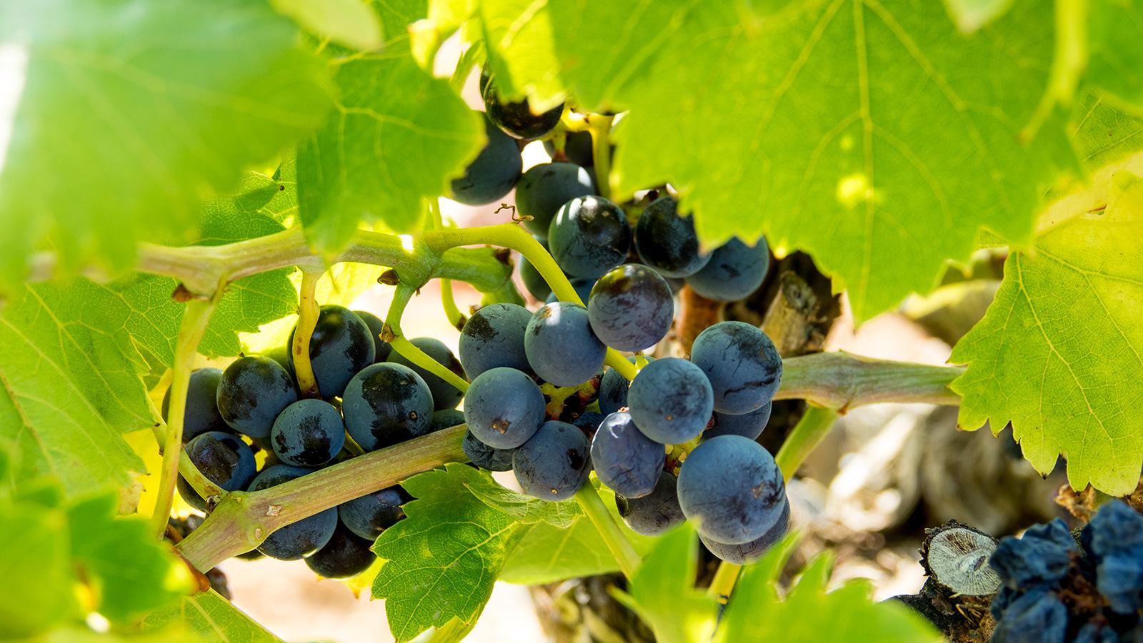 geoffroy-gambas-vins