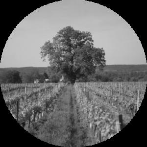 Azienda Agricola Alessandria Crissante – Barolo