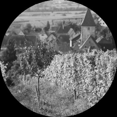 Domaine Marcel Deiss